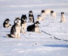 Hundeschlittentouren mit Huskies